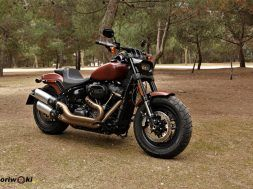 Harley Fat BobIMG_9391